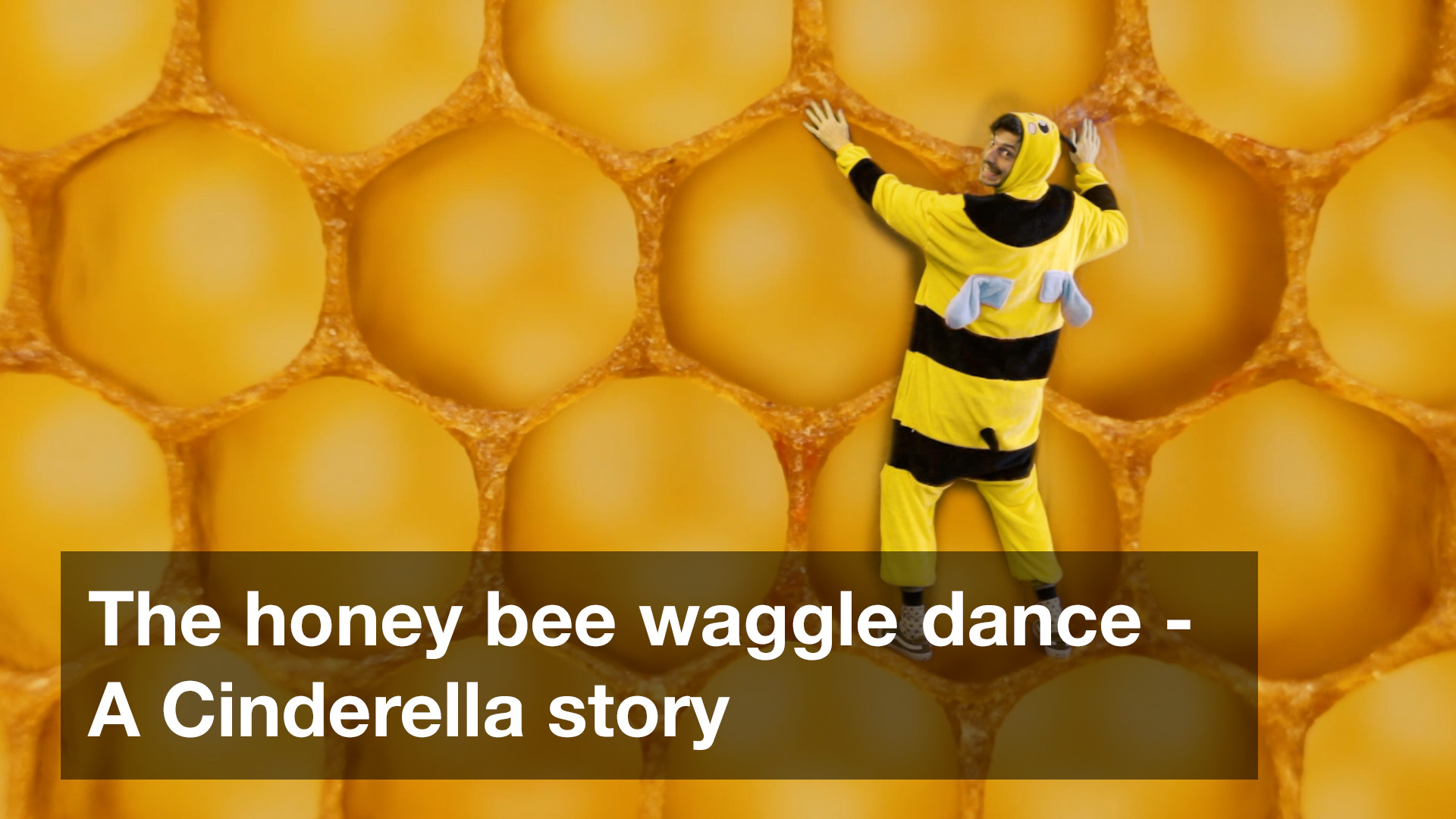 The honey bee waggle dance - A Cinderella story